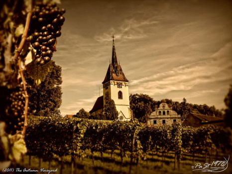 The Autumn Vineyard by PaSt1978