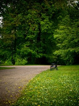 Lonely Bench, Park, Sheffield by letTheColorsRumble