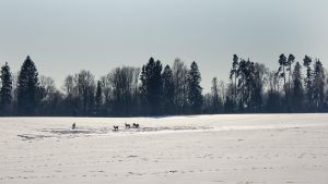 Gang of deers by Whimish