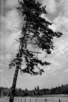 lonely tree by CrystalGraphic