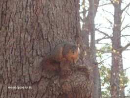 Squirrel II by BlissfullyRebellious