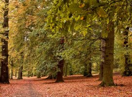 Autumnal Colours II by DundeePhotographics