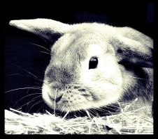 Rabit by pinah