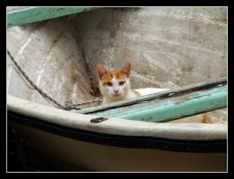 Cat in Boat by kanes