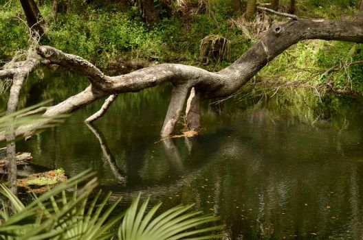 Hillsborough River (16) by Rexbrighton2