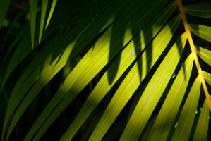 Palms and Shadows by MogieG123