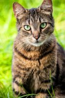 Green eyes in the Grass by FurBabyPhotography