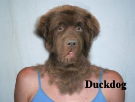 The newfoundland look by TheDuckdog