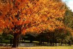Fall Leaves by Doumanis