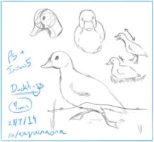 Duckling Doodle for /r/Sketchdaily by aaqucnaona