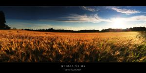 Golden Fields by theFouro