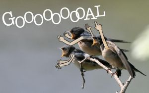 goal barn swallows by msprout