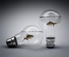 Fish In Bulb by AryChh