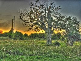 HDR, tree in field, sunset by Lectrichead