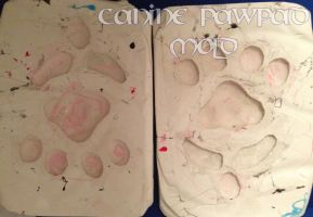 Canine Pawpad Molds FOR SALE by AtmosFur