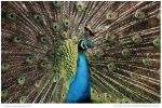 Displaying by In-the-picture