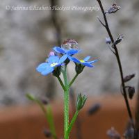 The World On A Forget Me Not by Hitomii