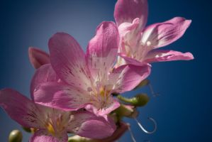 Pink Orchid flower tree by EyeInFocus