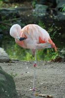 Flamingo 2 by Cassidy-Slingby