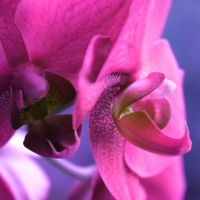pink orchid... by Naynaa