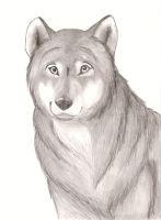 Wolf Portrait by nmt