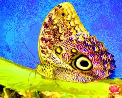 Pineapple Butterfly Painting by MeKamalaPhotography