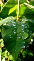Water Drops by OezSparky