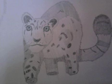 Snow Leopard Cub by SquirrelJoeArmstrong