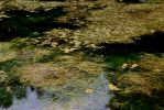 Murky Water (looks like an oil painting) by BlueshinePhotography