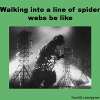 Walking into spider webs be like by xZachary11x