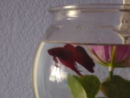 Percy my fishy by Pictwii