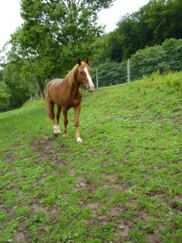 Animals - Horses 07 by Stock-gallery