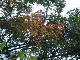 The first signs of fall by UnaccountedFranglais