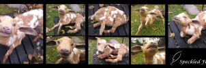 Poseable Fawn Coloured Goat Kid by Speckled-Feather