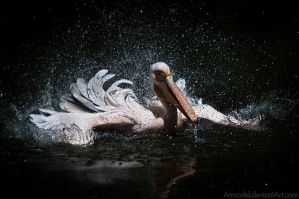 White Pelican II by amrodel