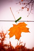 autumn leave by kama030