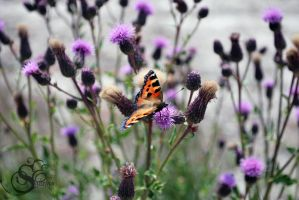 Butterfly #136 by Shayele82