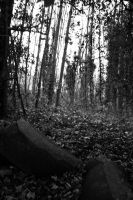 Into the woods by TheEpilogueOfLife