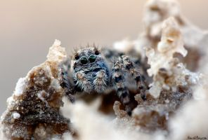Salty Spider by AimishBoy