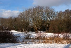 Winter trees in the park by steppelandstock