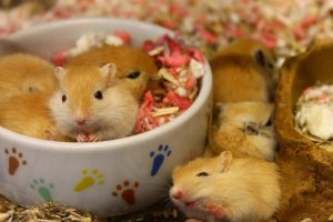 Cute Gerbils by waterdrup
