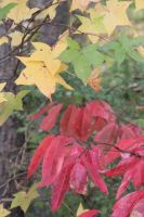 Autumn Array of Colors by Rjet33