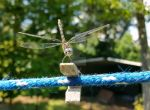 Dragonfly on the Clothesline 4 by ArjaySKing
