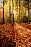 Classic Autumn Forest by verolive