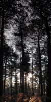 Allerthorpe Woods by Cique