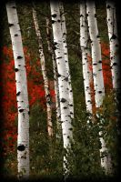 Color Aspens near Sundance Ski by houstonryan