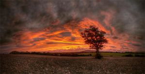 Burning Tree by wreck-photography
