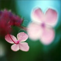 luck is pink by prismes