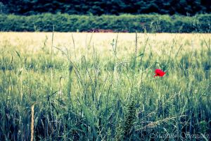 Poppy by Martina31
