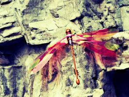 Dragonfly by Lesbehonest